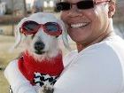 Такса Шанель – собачий долгожитель