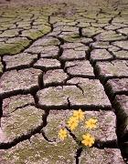 Человечество на пороге глобального экологического кризиса?