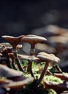 Лесные грибы убивают рак крови