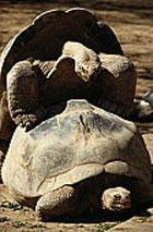 «Брачующиеся» черепахи парализовали работу нью-йорского аэропорта