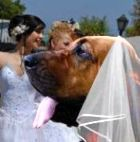 Жительница Ганы вышла замуж за… собственную собаку