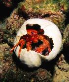 Из морской капусты и панциря краба создан самый тонкий пластырь в мире