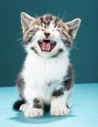 Ученые доказали, что кошки дрессируют своих хозяев