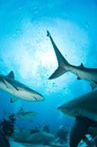 Биотопливо будут делать из акул, кофе и виски