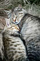Животные тоже видят эротические сновидения