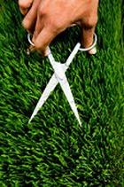 Запах свежескошенной травы успокаивает и делает счастливым