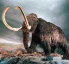 Виагра из… мамонтов?