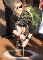 Великие дела Мадонны