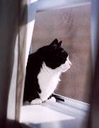 Что делают кошки в отсутствие своих хозяев?