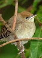 Ученые рассказали, до чего довело подкармливание птиц