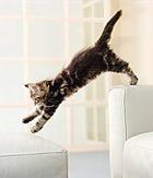 Ученые: собаки лучше кошек, но кошек любят больше…