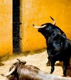 В Испании запретят корриду
