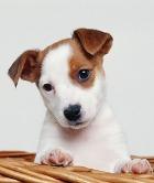 Собаки распознают рак на ранних стадиях!