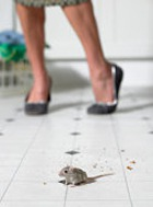 Почему женщины боятся мышей?