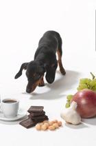 50 граммов шоколада убивают собаку и кошку