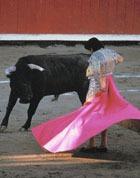 Для корриды будут специально клонировать свирепых быков