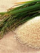 Рис назван панацеей от болезней