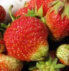Ягоды – вкусная профилактика рака