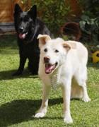 Пёс, снявшийся в поттериане, попал в приют