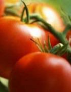 Какие из продуктов предпочесть в 2012 году?
