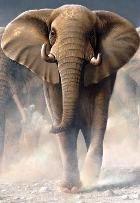 Животные планеты вымирают