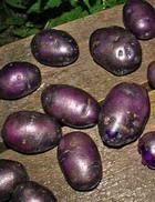 Картофель поможет одолеть гипертонию и рак