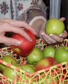 Какие фрукты и овощи защитят от недугов?