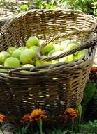 Яблоки помогут нормализовать давление