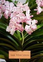 В честь принца Уильяма и Кейт Миддлтон назван цветок