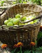 Счастье не в деньгах, а в овощах и фруктах