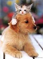 Щенки с котятами заставят вас работать эффективнее