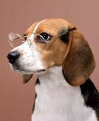 Собаки чуют рак - очередные выводы учёных