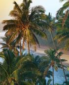 Гавайским островам предсказано исчезновение с лица Земли