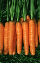 Морковь и яблоко: что для полезнее здоровья?