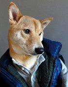 Menswear Dog – собачий блог, который пользуется популярностью