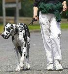 В одном из городов России ввели запрет на выгул собак детьми