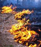 Российские леса начнут гореть в апреле