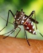 Учёные нашли спасение от комаров
