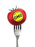 ГМО – причина воспаления в желудке