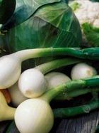 Молотые овощи в уксусе