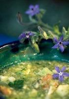 Суп с огуречной травой (бораго)