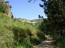 Прогулка – прекрасное средство от стресса
