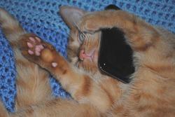 Сколько смартфонов портят кошки и собаки в год?