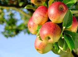 Какой продукт входит в диету долгожителей?