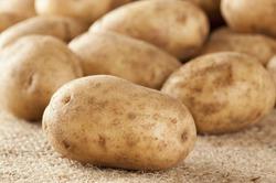 Картофель может стать причиной гибели людей