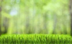 Как использовать декоративную траву