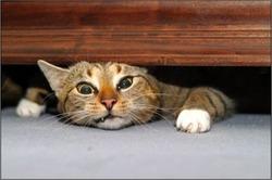 Дневник кота Плинтуса (часть 2)