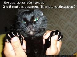 Дневник кота Плинтуса (часть №3)