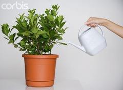 Как поливать цветы зимой