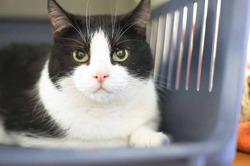 Популярность кошек вредит их жизни
